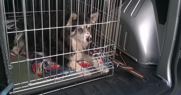 Koiran jättäminen kuumaan autoon on eläinsuojelurikos