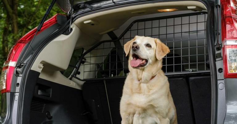 Koira autossa? Lisävarusteilla helpotetaan koiran elämää!