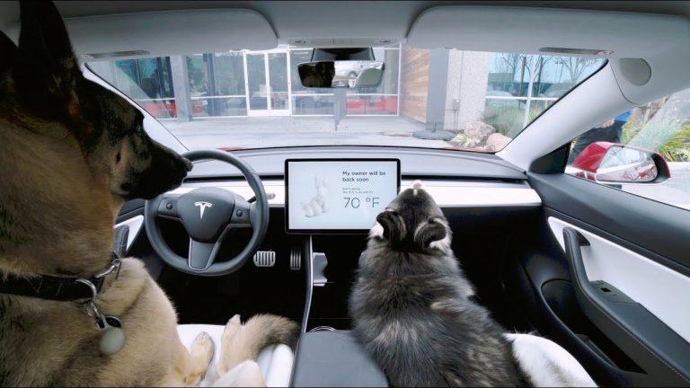 Video: Näin toimii Teslan Koiratila