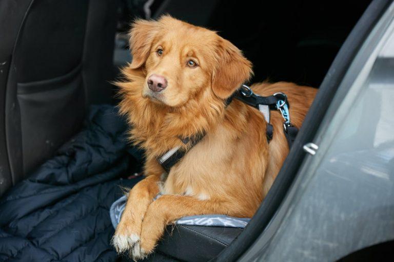 Ota nämä asiat huomioon, kun auton kyydissä on koira
