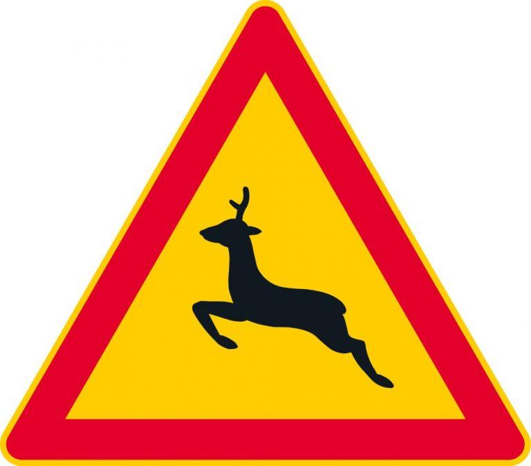 Rikkihapporekan peurojen väistö johti ulosajoon